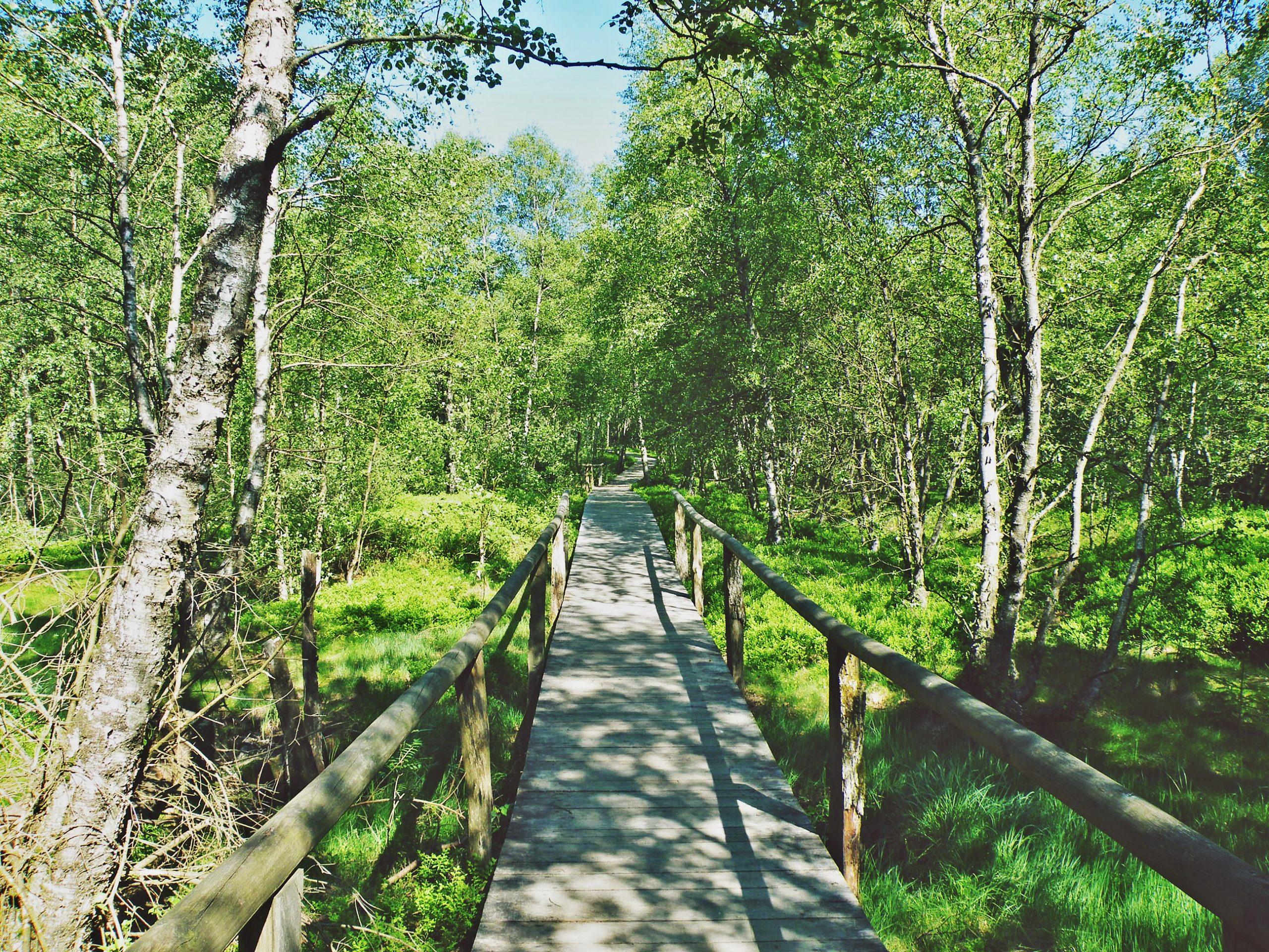 Wandern im Roten Moor